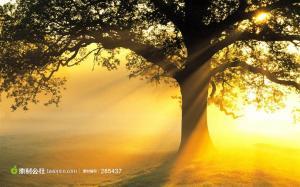 tooopen_201211171625076230